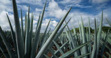 Jalisco Conmemoran al Tequila con Certificación Responsable