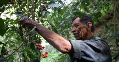 Celebran al café con prácticas comunitarias y sustentables
