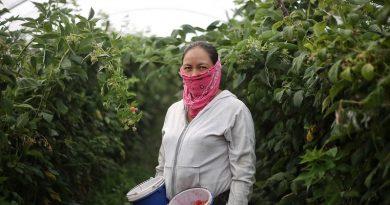 Presentan programa para proteger derechos de trabajadoras del hogar y del campo
